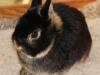 dark-brown-bunnie