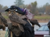 Oklahoma Great Horned Owl
